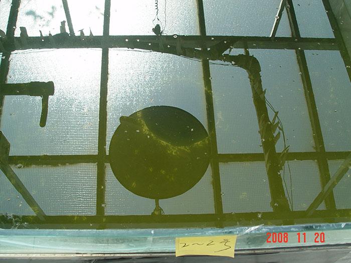 泓宝-泼洒遮阳菌消藻后的实验池