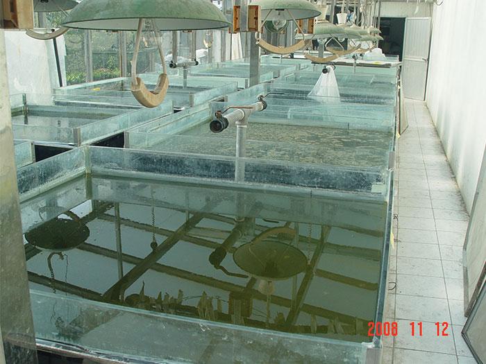 泓宝-遮阳菌消藻试验