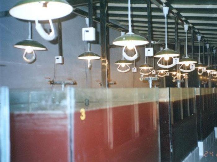 光合细菌实验室