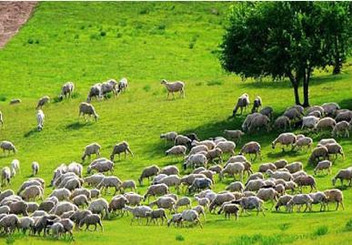 农业畜牧业企业