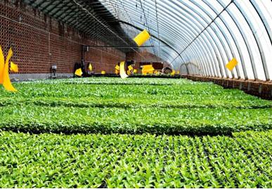 农业种植业企业