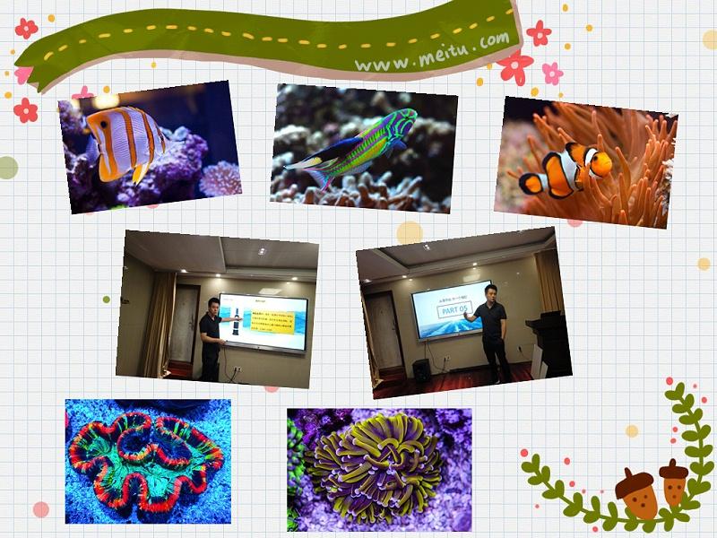 观赏鱼饲养专用菌类制剂
