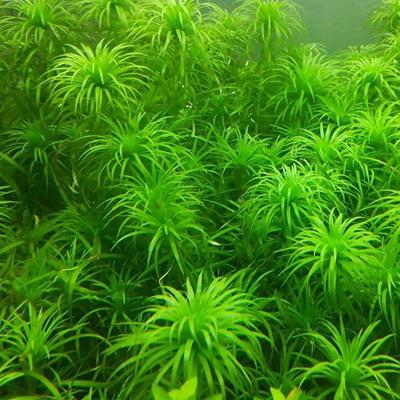 保护草体环境