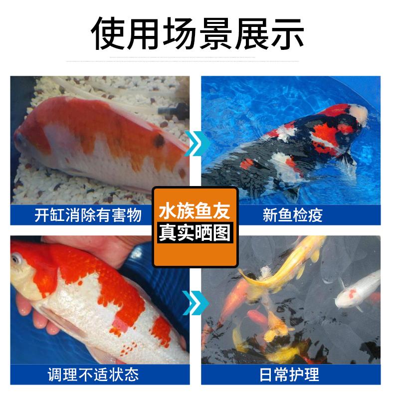 观赏鱼病治疗