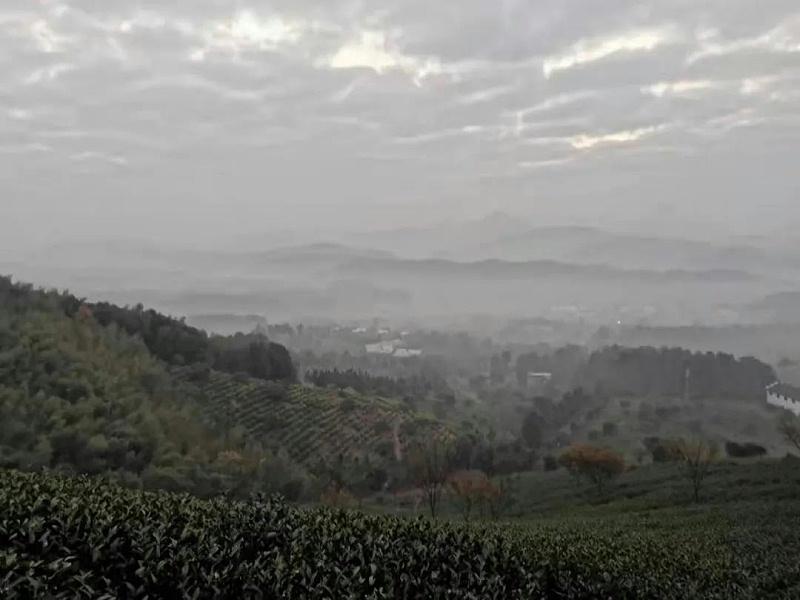 白茶山上等待日出