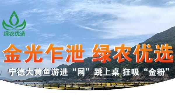 """【9.12直播预告】绿农优选""""宁德大黄鱼""""首场直播盛宴"""